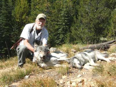 SB---Wolf-harvest-8-31-11-104